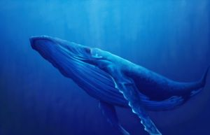 humpback_whale_by_kaylalily